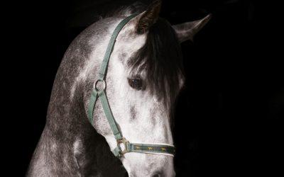 Hest på fôr i høstferien eller i vinter?